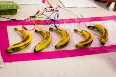 Teclado da banana Fotografia de Stock