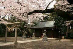 Um templo budista sob um dossel das flores de cerejeira imagens de stock