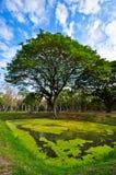 Um templo de ruínas grande da árvore imagem de stock