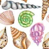 Um teste padrão com os shell da aquarela ilustração royalty free