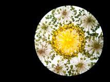 Um teste padrão da semente dirige a representação da fase dormente do natute foto de stock royalty free