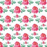 Um teste padrão das rosas Foto de Stock