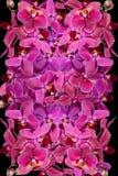Um teste padrão de flores da orquídea Fotos de Stock
