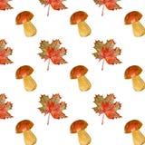 Um teste padrão dos cogumelos e do bordo Fotografia de Stock Royalty Free