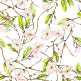 Um teste padrão floral sem emenda com um ornamento de um ramo de árvore da maçã com as flores do rosa macio e as folhas de flores ilustração do vetor