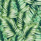 Um teste padrão sem emenda com os ramos da aquarela das folhas de uma palma pintada em uma obscuridade - fundo verde Imagens de Stock Royalty Free