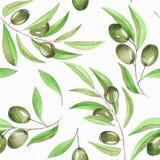 Um teste padrão sem emenda com os ramos da aquarela de azeitonas verdes em um fundo branco Imagem de Stock