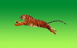 Um tigre que move-se e que salta Imagens de Stock