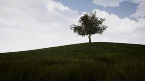 Um timelapse que mostra uma árvore grande durante as 4 estações do tempo filme