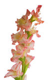 Um tipo de flor da flor Fotos de Stock Royalty Free