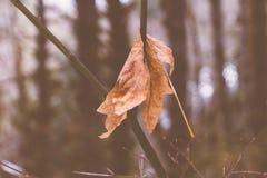Um tiro de uma folha de queda fotos de stock