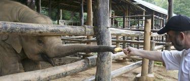 Um tiro do acampamento do elefante de Maesa, Chiang Mai, Tailândia imagem de stock