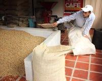 Um trabalhador do café que recolhe feijões em uns sacos da juta fotos de stock
