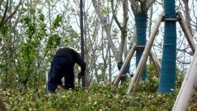 Um trabalhador emigrante que esteja trabalhando em plantas de poda filme