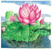 Um trabalho do lápis da cor de uma flor de Lotus em uma lagoa Foto de Stock