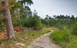 Um trajeto arenoso pequeno na floresta Fotografia de Stock
