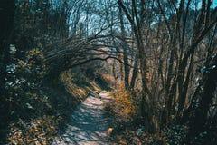 Um trajeto através da floresta fotografia de stock royalty free
