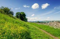 Um trajeto através de um prado florido Fotos de Stock Royalty Free