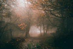Um trajeto através de uma floresta enevoada belamente atmosférica do outono na floresta do decano editou similar aos filtros de I fotos de stock royalty free