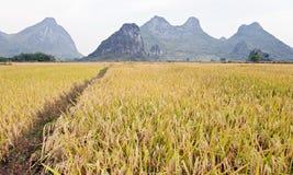 Um trajeto através dos campos dourados Fotografia de Stock Royalty Free
