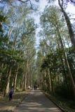 Um trajeto com árvores Fotografia de Stock