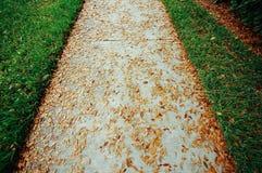 Um trajeto com folhas Imagem de Stock