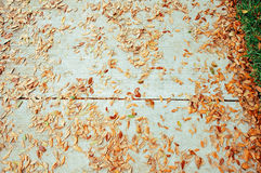 Um trajeto com folhas imagens de stock