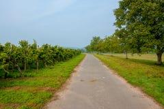 Um trajeto da bicicleta ao lado dos vinhedos germany Imagens de Stock