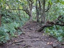 Um trajeto da selva em Maui Imagens de Stock Royalty Free