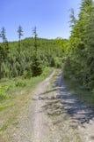 Um trajeto de caminhada meandra ao longo de um prado da montanha em wi de um dia ensolarado Fotos de Stock Royalty Free