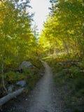 um trajeto de floresta nas montanhas rochosas Imagens de Stock
