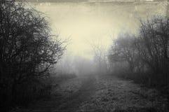 Um trajeto delével em um dia de invernos nevoento, cercado por árvores Com um sum?rio borrado escuro, assustador, efeito do grung fotos de stock royalty free