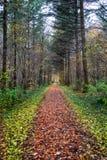 Um trajeto direto no meio da floresta com folhas coloridas foto de stock royalty free