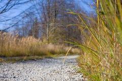 Um trajeto do cascalho em uma floresta alinhou com grama fotos de stock