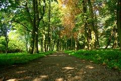 Um trajeto em um parque. Imagem de Stock Royalty Free