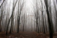 Um trajeto em uma floresta fotos de stock