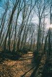 Um trajeto em uma floresta outonal imagem de stock royalty free