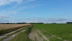Um trajeto entre campos de cereal Imagem de Stock Royalty Free