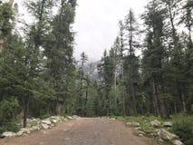 Um trajeto na floresta grossa verde foto de stock