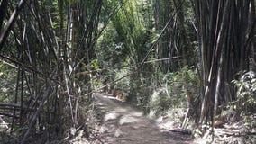um trajeto na selva em Tailândia fotos de stock