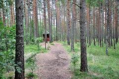 Um trajeto nas madeiras Foto de Stock