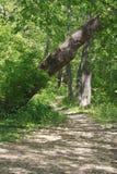 Um trajeto nas madeiras Imagens de Stock