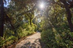 Um trajeto no parque da casa de campo Pallavicini, joelhos Foto de Stock