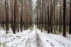 Um trajeto que conduz nas profundidades da floresta do pinho do inverno Imagens de Stock