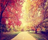 um trajeto que vai embora uma floresta ou um parque com as árvores com folhas de outono foto de stock