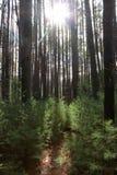Um trajeto sunlit através das madeiras Imagem de Stock Royalty Free