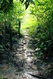 Um trajeto verde natural fotos de stock