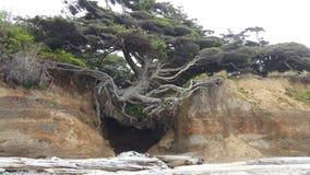 Um Tree& x27; escape de s fotografia de stock royalty free