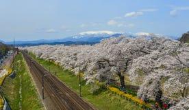 Um trem c?nico com flor de cerejeira imagens de stock