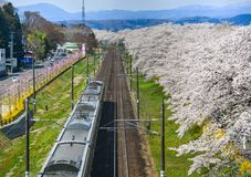 Um trem c?nico com flor de cerejeira imagens de stock royalty free